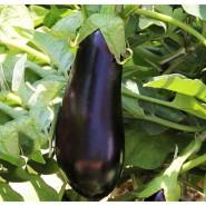 Антрацит F1 семена баклажана