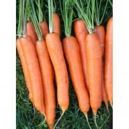 Наполи F1 семена моркови Нантес  (1,6-1,8 мм)