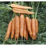 Скарла семена моркови Флакке