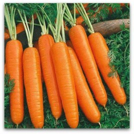 Вита Лонга семена моркови Флакке (Bejo) поздний