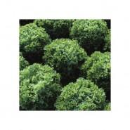 Фристина семена салата тип Фризе