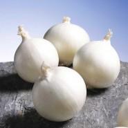 Гледстоун семена лука репчатого белого раннего
