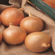 Халцедон семена лука репчатого среднего