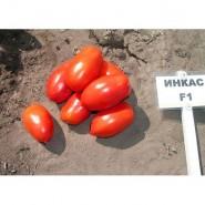 Инкас F1 семена томата