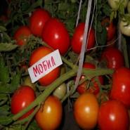 Мобил семена томата позднего