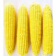 ЛС 779 (LS 779) F1 семена кукурузы суперсладкой