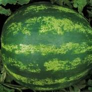 Кримсон Свит семена арбуза