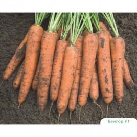 Бангор F1 семена моркови Берликум PR (1,6-1,8 мм)