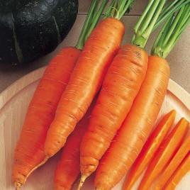 Бангор F1 семена моркови Берликум PR (2,0-2,2 мм)