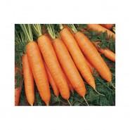 Бангор F1 семена моркови Берликум PR (2,2-2,4 мм)