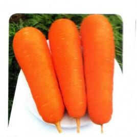 Боливар F1 семена моркови Шантане 1,6-1,8 среднеспелой