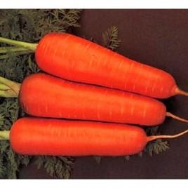Болтекс семена моркови Шантане (Clause) среднепоздний