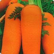 Каскад F1 семена моркови Шантане PR (1,8-2,0 мм)