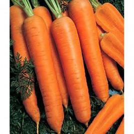 Камаран F1 семена моркови Берликум PR (1,6-1,8 мм)