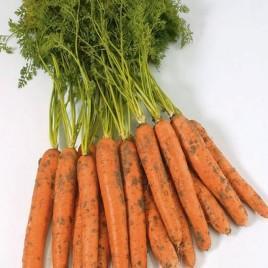 Камаран F1 семена моркови Берликум PR (1,8-2,0 мм)