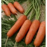 Карини семена моркови Шантане (Bejo) ранний сорт