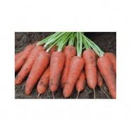 Кордоба F1 семена моркови  (1,8-2,0 мм)