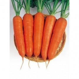 Виктория F1 семена моркови Шантане (Seminis )