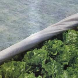 Агроволокно белое, плотность 30г/м2, длина 200м