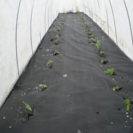 Агроволокно черное, плотность 50 г/м2, длина 50м